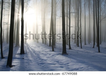 Path in the misty winter forest backlit by the morning sun.