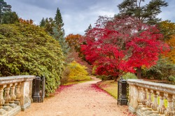 Path in the park, over the bridge.Beautiful colored red tree in background.Sheffield Park Garden, Uckfield, Sussex, England, UK.