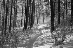 Path in the snowy forest. Winter day. Black and white photography