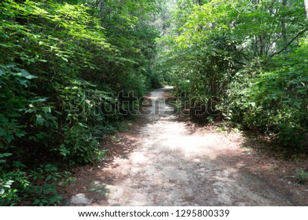 Path in the Woods #1295800339