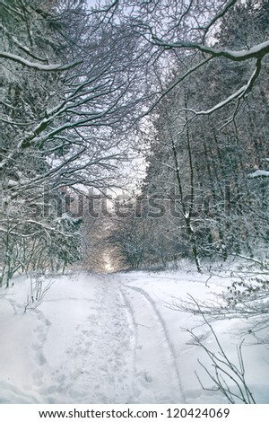 Path in winter forest, focus set in background