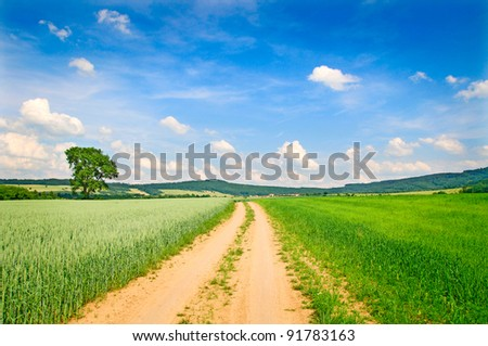 Path into rural landscape, summer countryside.
