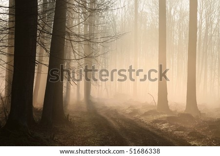 Path leading through a misty forest in the morning sunlight.