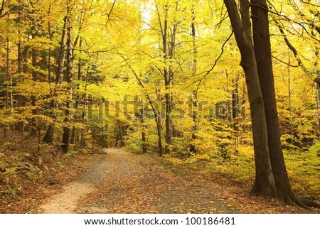 Path leads through picturesque autumnal forest.