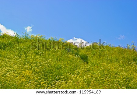 Path on a green grass against the blue sky with clouds.