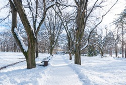 Path or pathway in the park with snow trees and wooden bench in the winter season  and sunlight