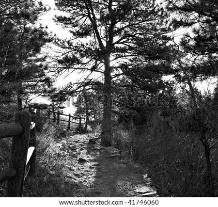 Path over a forested hill with pine trees in black and white with back-lighting