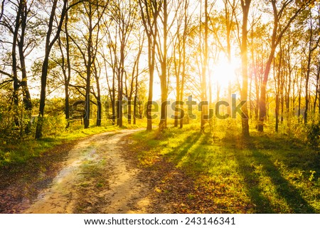 Path Road Way Pathway On Sunny Day In Summer Forest. Sunbeams Pour Through Trees. Russian Nature