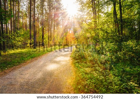 Path Road Way Pathway On Sunny Day In Summer Sunny Forest at Sunset or Sunrise. Nature Woods in Sunlight #364754492