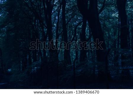 path through a dark forest at night #1389406670