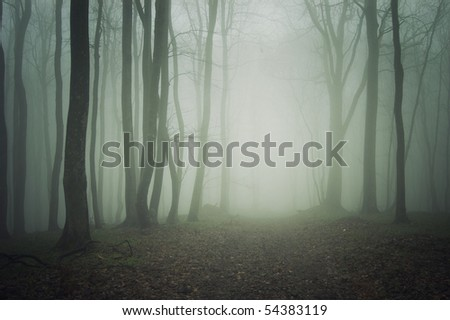 wallpaper dark forest. a dark forest with fog