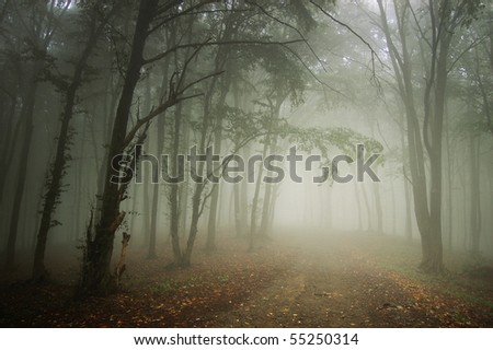 path through a forest with fog