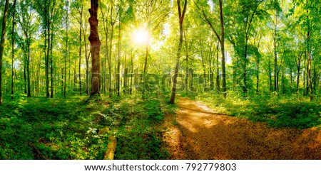 Path through a spring forest in bright sunshine