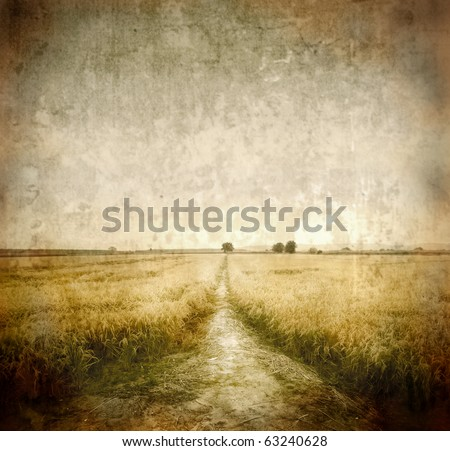 Path through a wheat field