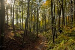 Path through an autumnal beech tree forest in Muziekbos woods, Ronse, Flanders, Belgium