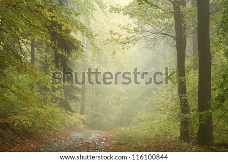 Path through autumn forest on a rainy day.