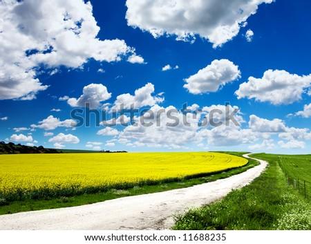 Path through Canola Field - stock photo