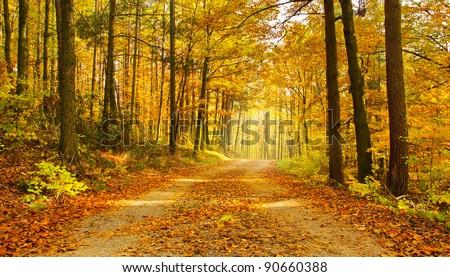 Path through forest - autumn