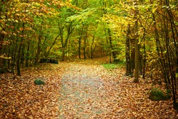 Path through forrest during fall