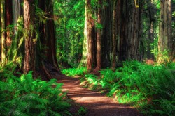Path Through the Forest, Redwoods National & State Parks, California