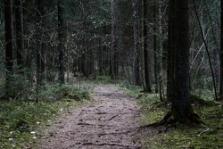 path through the forest trees, nature green wood