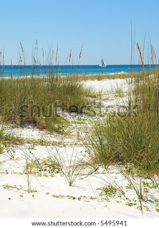 Path Through the Sand Dunes and Sea Grasses with Pretty Ocean in Distance