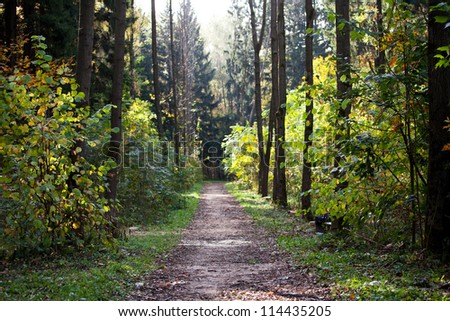 Path through the trees in the autumn forest - stock photo