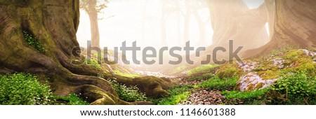 path through the woods,  magical fantasy forest at sunrise, 3d landscape illustration banner