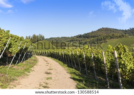 path through vineyard landscape in summer with clear blue sky and fresh green leaves