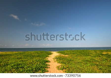 path to a coral sea beach north of Cairns, Queensland, Australia
