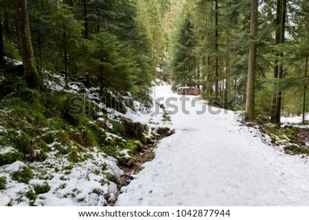 path to Burgbach waterfall frozen in wintertime in Germany in Bad Rippoldsau #1042877944
