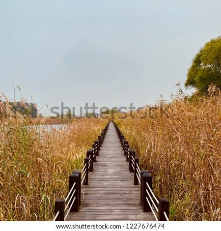 Path to endless autumn. #1227676474