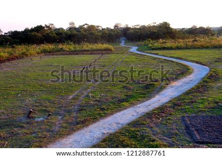 Path to follow, path in jungle #1212887761