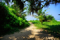 Path to the beach and ocean. Scenic view of the Indian Ocean through the jungle at Bentota Beach, Sri Lanka, Asia. Sunny day on the beach in the paradise tropics