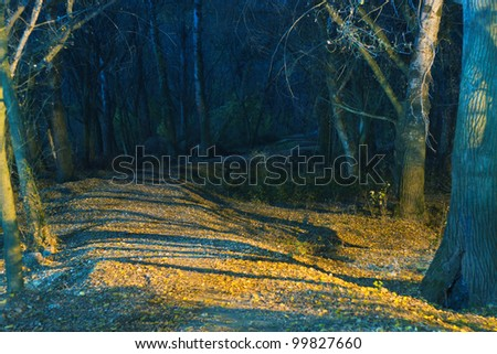 Path to the dark forest at night with lights and shadows from street lamp