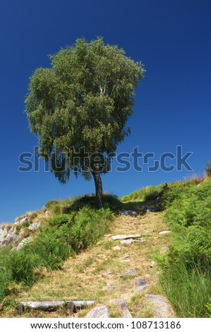 Path to the hill with beautiful tree