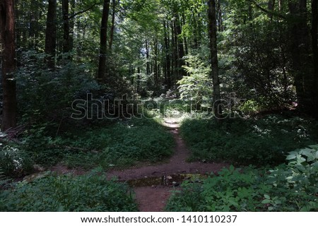 Path / Trail in the Woods #1410110237
