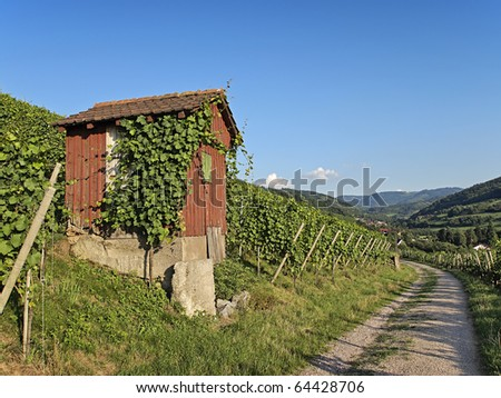 path with a wooden hut leading through vineyard landscape on a sunny summer afternoon
