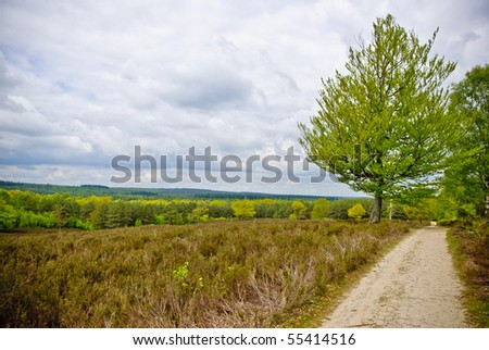 Path with tree in a field of calluna vulgaris with heavy clouded sky #55414516