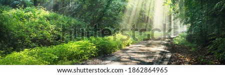 Photo of  Pathway in a majestic green deciduous forest in a morning fog. Ancient tree silhouettes close-up. Atmospheric dreamlike summer landscape. Sun rays, soft light. Pure nature, ecology, fantasy, fairytale