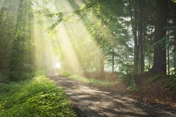 Pathway in a majestic green deciduous forest. Natural tunnel. Mighty tree silhouettes. Fog, sunbeams, soft sunlight. Atmospheric dreamlike summer landscape. Pure nature, ecology, fantasy, fairytale