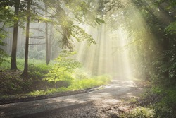 Pathway in a majestic green deciduous forest. Natural tunnel. Mighty tree silhouettes. Fog, sunbeams, soft sunlight. Atmospheric dreamlike summer landscape.