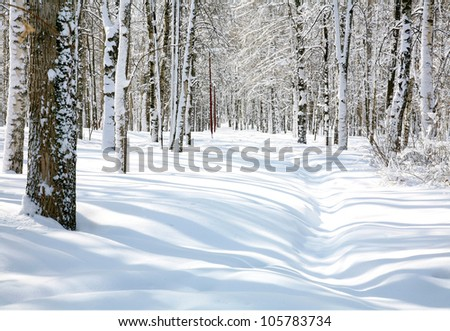 Pathway in april beautiful birch grove