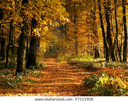 Pathway in autumn forest. Beautiful nature background.