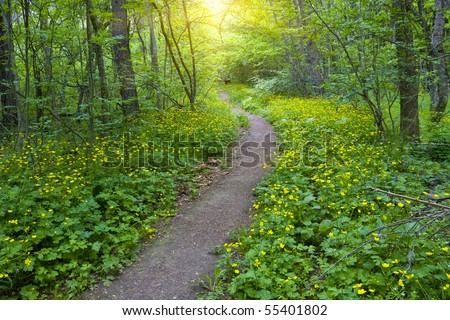 pathway in green forest #55401802