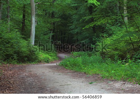 pathway in green forest, nature scenic