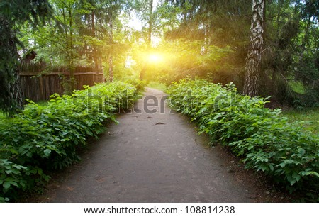 pathway in park