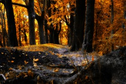 Pathway in the autumn forest among the trees.