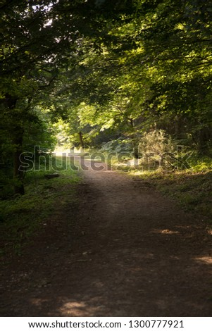 Pathway in the forest #1300777921
