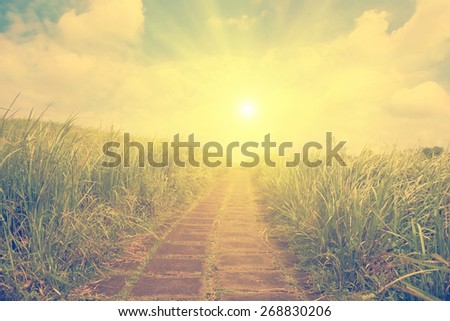 Pathway in the grass- instagram style